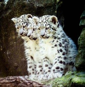 Irina's Cubs