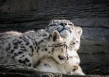 Irina + Cub