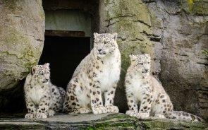 Mum & The Kids