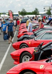 Lots of prancing horses