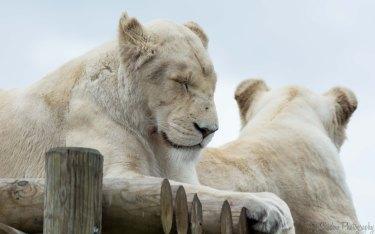 A quick nap