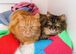 Louis & Tilly