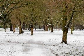 Bushy Park Gardens
